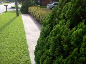 landscaping encroachment sidewalk