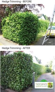 Hedge trimming before and after photos Vancouver BC