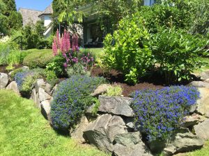 spring garden clean up vancouver bc