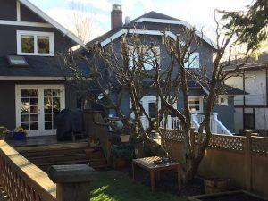 Fruit tree pruning winter