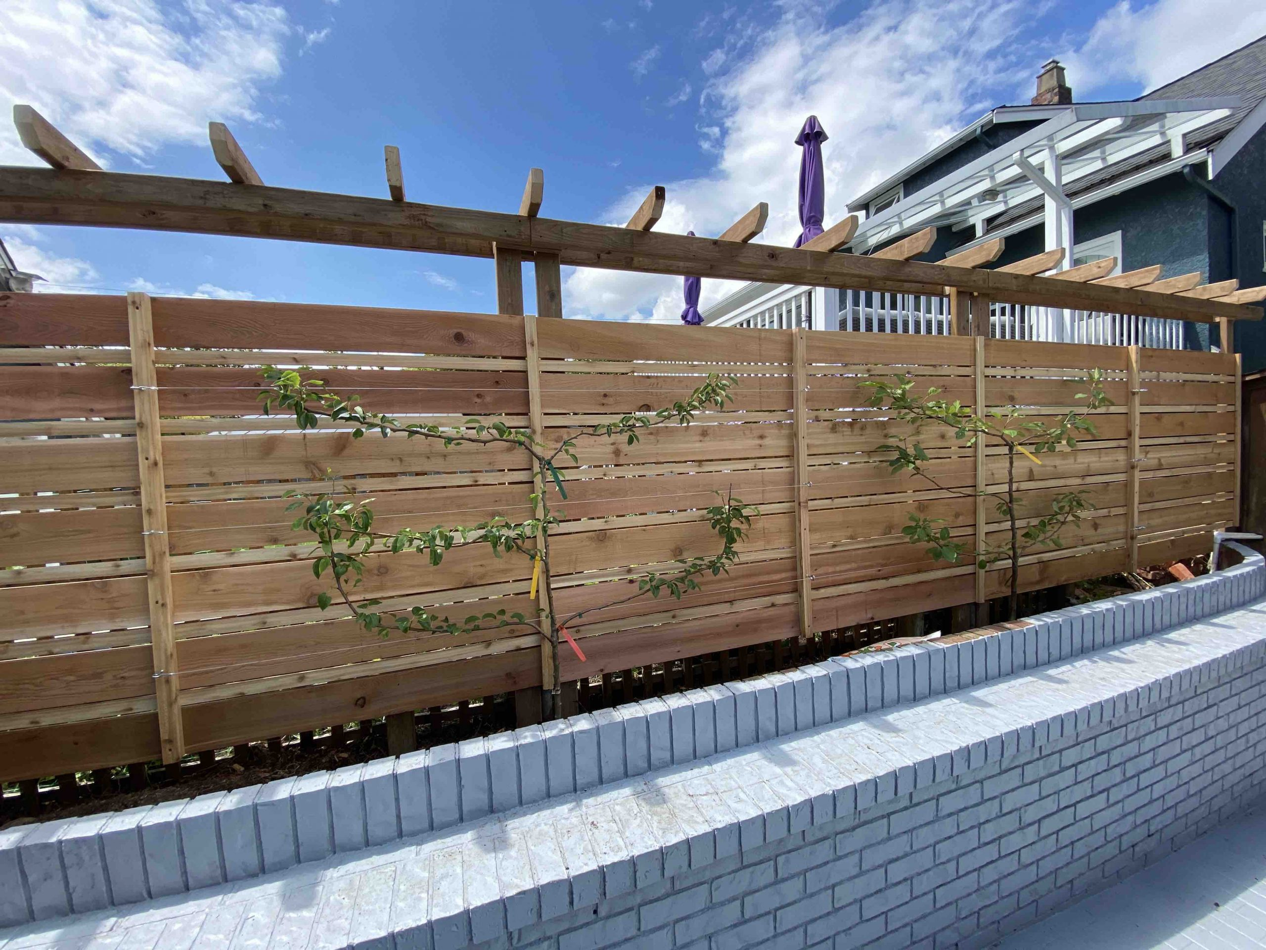 Fence with trellis espalier apple trees landscape carpenter Vancouver BC