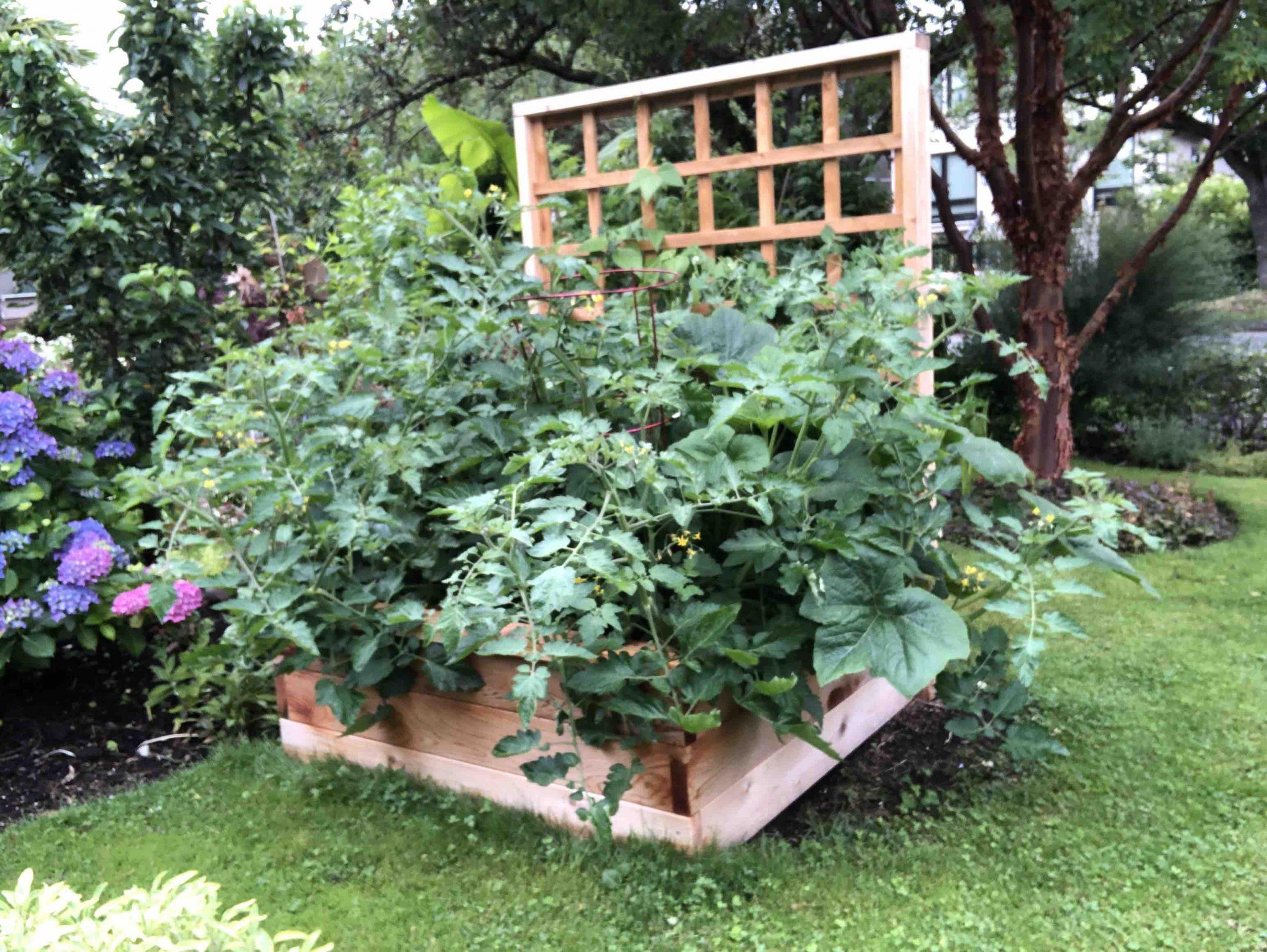 Cedar raised vegetable garden box Vancouver BC landscape carpentry